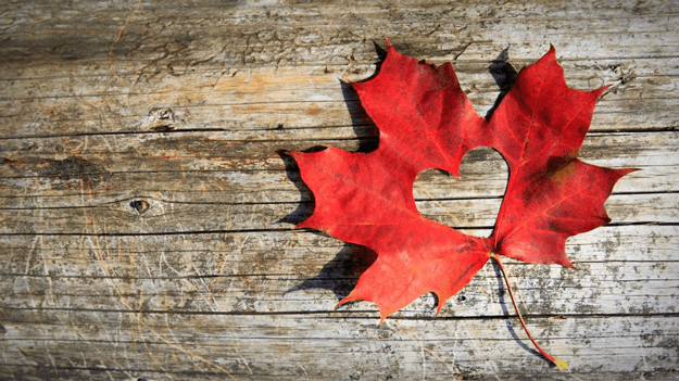 Photo of maple leaf with heart cut out of center to illustrate what we are thankful for in HR trends blog1