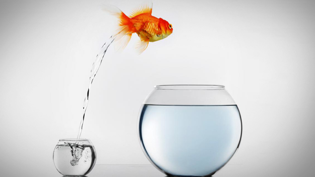 Picture of goldfish jumping from small bowl to big bowl to show life changes that have a big impact on your finances in a HR trends blog