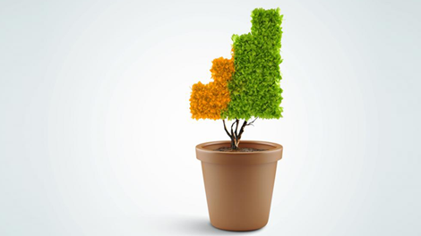 Potted plant shaped into staircase to show how one can maximize contributions in a defined benefit plan in employee benefit resources